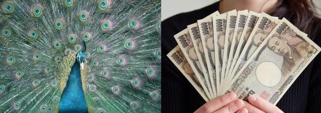 孔雀とお金の関係